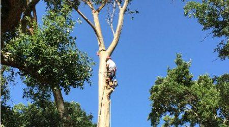 arboricultura-01